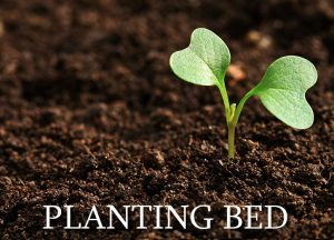 planting-bed